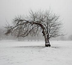 winters-snow