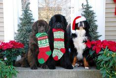 15+ Funny Christmas Pics That'll Improve Your Mood