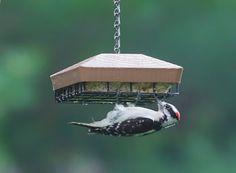 Steve Byland Nature Photography: Create Your Own Bird Sanctuary