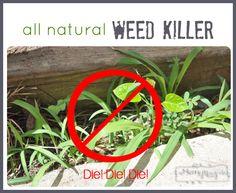 Vinegar as an All Natural Weed Killer