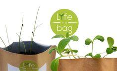 Cebolinho e Borragem Life in a bag