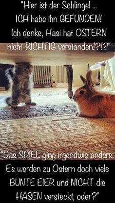 Die 312 Besten Bilder Von Ostern In 2019 Rabbits Easter Und Happy