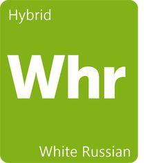 Información sobre la variedad White Russian - Leafly