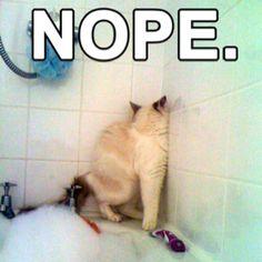 Cat, hating bubbles.