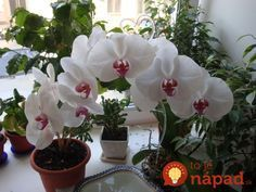 VK is the largest European social network with more than 100 million active users. White Orchids, Ikebana, Amazing Nature, Mother Nature, House Plants, Beautiful Flowers, Diy And Crafts, Photo Wall, Home And Garden