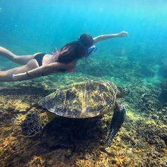 Swimming with a turtle kapalua bay maui hawaii