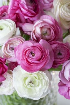 Glow, Colours, Texture, Rose, Flowers, Plants, Graphics, Surface Finish, Pink