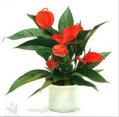 planta de interior con flores de color naranja