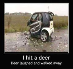 I Hit A Deer! Deer Laughed And ... | Click the link to view full image and description : )