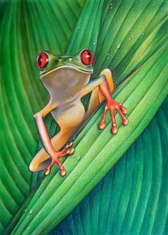 Tree Frog, Russer, Colored Pencil, http://coloredpencilmag.com/wp-content/uploads/2013/09/russer_treefrog.jpg