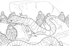 Free Leopard Gecko Coloring Pages - High Quality Coloring Pages