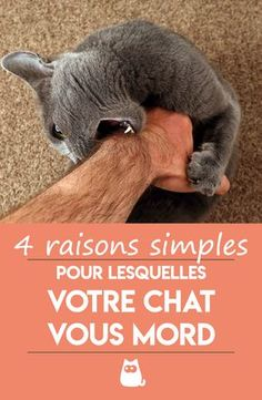 Why does my cat lick me and bite me? - PlanèteAnimal - - Pourquoi mon chat me lèche puis me mord ? Does your cat lick you and then viciously attack you with a sharp bite? We explain why and how … # PourquoiMonChatMeLèchePuisMeMord Interior Design Living Room Warm, Living Room Designs, Design Bedroom, Cozy Place, Sofa Pillows, Sustainable Design, Cute Animals, Ainsi, Cushion