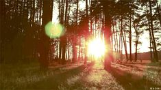 The perfect GoodEvening Sunset Forest Animated GIF for your conversation. Discover and Share the best GIFs on Tenor. Sunny Song, Sun Gif, Good Night Gif, Bright Side Of Life, Evening Sunset, Nature Gif, Matou, Life Is Beautiful, Beautiful Things