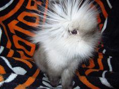 crazy rabbit hair
