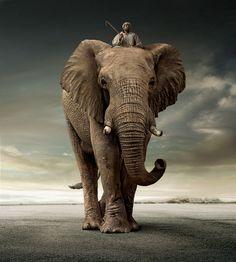 BEAR AND ELEPHANT on Behance --- Credit:  Platinum FMD