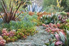 This is OMG Gorgeous! All succulent landscape. #xeriscape #succulents                                                                                                                                                                                 More