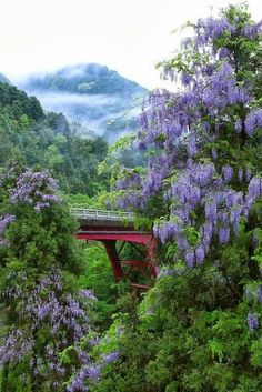 Wisteria, Kitayama, Kyoto, Japan >>> I can't wait for spring!!!