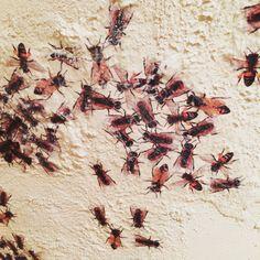 "I love bees. Detail of Emilio Isgrò painting ""Apriti Ape"""