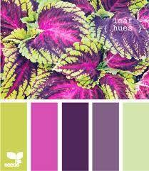 Image result for design seeds purple pink green