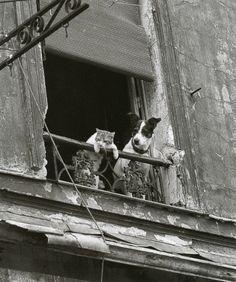 Прикольные фото животных. (19 фото) | ФотоИнтерес