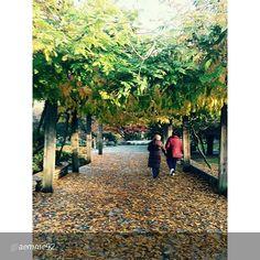 #Torino raccontata dai cittadini per #inTO Foto di aemme92 3. La bellezza dell'autunno torinese