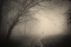 Foreboding Forest Photography - The Forests of Romania Shot by PhotoCosma is Eerily Alluring (GALLERY) Deer Wallpaper, Forest Wallpaper, Forest Photography, White Photography, 4k Ultra Hd Wallpapers, Surreal Photos, Misty Forest, Beautiful Forest, Beautiful Places