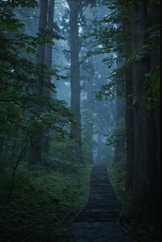 path into the mist