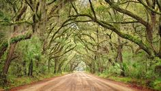 This Tunnel Of Trees In South Carolina Is Positively Magical And You Need To Visit South Carolina Coast, South Carolina Vacation, Carolina Beach, Beautiful Roads, Beautiful Places, Places To Travel, Places To See, Travel Destinations, Edisto Beach