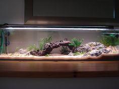 Lara's 12 gallon long 'Tango' - Aquascaping - Aquatic Plant Central