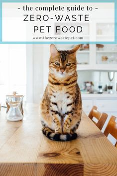 When it comes to zero-waste pet care, there's little helpful, non-judgey info out there. Especially when it comes to pet food. Kittens Playing, Cats And Kittens, Kitty Cats, Human Food For Cats, Dangerous Foods For Dogs, First Time Cat Owner, Cat Insurance, Health Insurance, Kitten Care