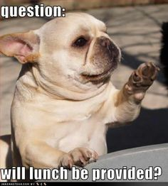 #lol #funny #dog #pet #pics #caption!