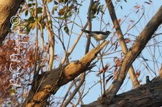 Wildlife #photo #photography #photoart #photoblog #ThePhotoHour #PNEPhotography #wildlife #nature #birds #birdphotos