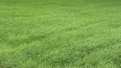 Photo about Lawn with new green grass after rain. Image of greenery, lawn, natural - 30894728 Lawn Problems, Mousse, Green Grass Background, New Green, Photo Backgrounds, Stock Footage, Stepping Stones, Greenery, Fields