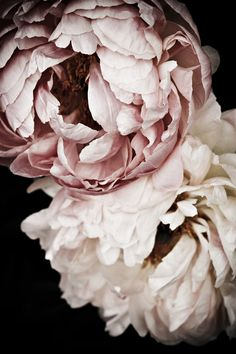 Sweet Dreams Peonies | Chelsea Flower Show really like the dusky pink - not so sickly sweet as some others?