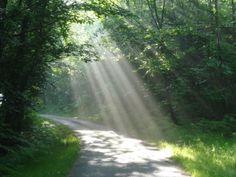#marcheNordique #saintegemme #foretDeStGermain Il fut un temps où on pouvait traverser la forêt de Marly-le-roi en voiture, et ainsi rallier la D98 (qui relie St Germain à St Nom) à Sainte Gemme, petit hameau situé au-dessus de #Feucherolles. Aujourd'hui seuls cyclistes et randonneurs peuvent profiter de cette petite route tranquille, à partir de laquelle rayonnent de nombreux sentiers et chemins... Marly Le Roi, Idole, Plein Air, Paths, Waterfall, Blog, Country Roads, Outdoor, Ainsi