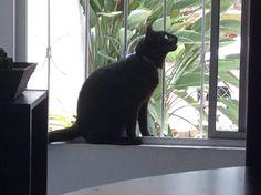 El gato Rocky