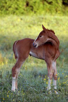Newborn Foal by wendy_chretien on Flickr.