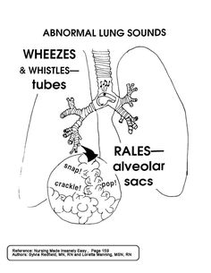 Science Puns, Science Notes, Science Facts, Respiratory Therapy, Respiratory System, Med Surg Nursing, Nursing Mnemonics, Medical Laboratory Science, Fundamentals Of Nursing