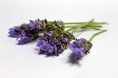 Make Lavender Oil....this link works, the last one I pinned had problems with the link
