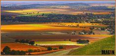 Autumn in #Barossa @winewankers @JMiquelWine @MrScottEddy @tinastullracing @MacCocktail @LoriMoreno #adelaide #wine
