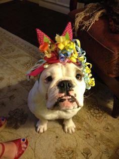Happy 1st Birthday, little girl!