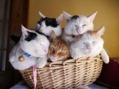 all five in one basket!  bottom layer: Chibi-Side, TyaTora, Master Shiro.  top layer: Chibi-Bang, Mimi