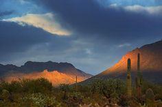 Sonoran Desert Blues...
