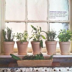 1000 Images About Garden On Pinterest Window Herb