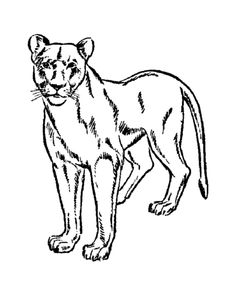 Wild animal coloring page | Female lion, lioness Coloring page