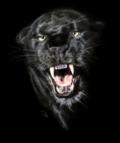 ARCHIVE - MINNI HAVAS, she has skills ! luv it , looks so real ! Everybody needs a panther