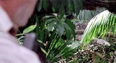 Dinosaur Art, Plants, Plant, Planets