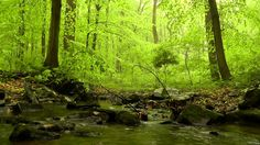 Relaxing HD Nature Scene #3: 60 minutes of Woodland Ambience with Birds & Trickling Stream Sounds