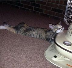 猫「ぬくぬく…」心の底から幸せそうに暖まっている写真いろいろ:らばQ