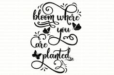 Bloom Where You Are Planted svg digital design cutting files for Cricut Design Space and Silhouette Studio SVG PDF EPS files Commercial Use by PerfectlyPoshPixels on Etsy